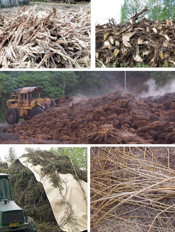 biomass-fuels-ea